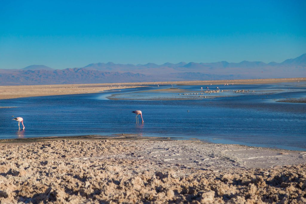 salar-do-atacama-flamingos