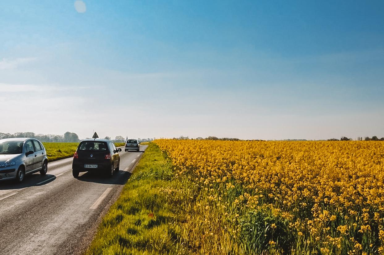 campos floridos na Normandia