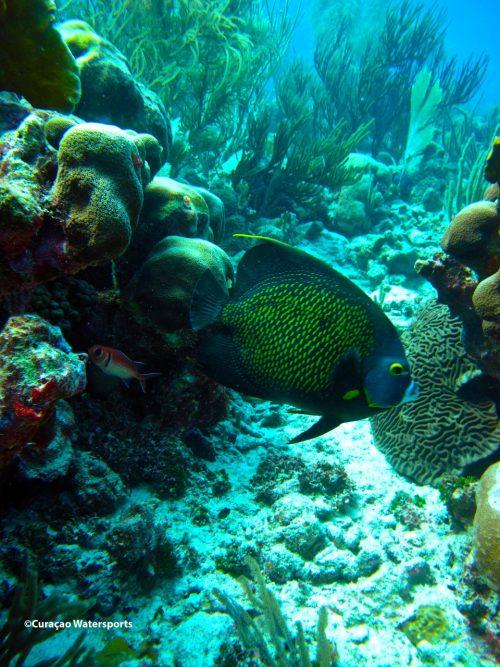 vida marinha vista em mergulho em curaçao