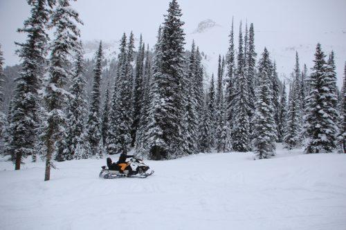 snowmobile entre as árvores