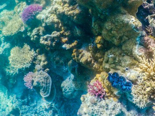corais em Lady Musgrave island