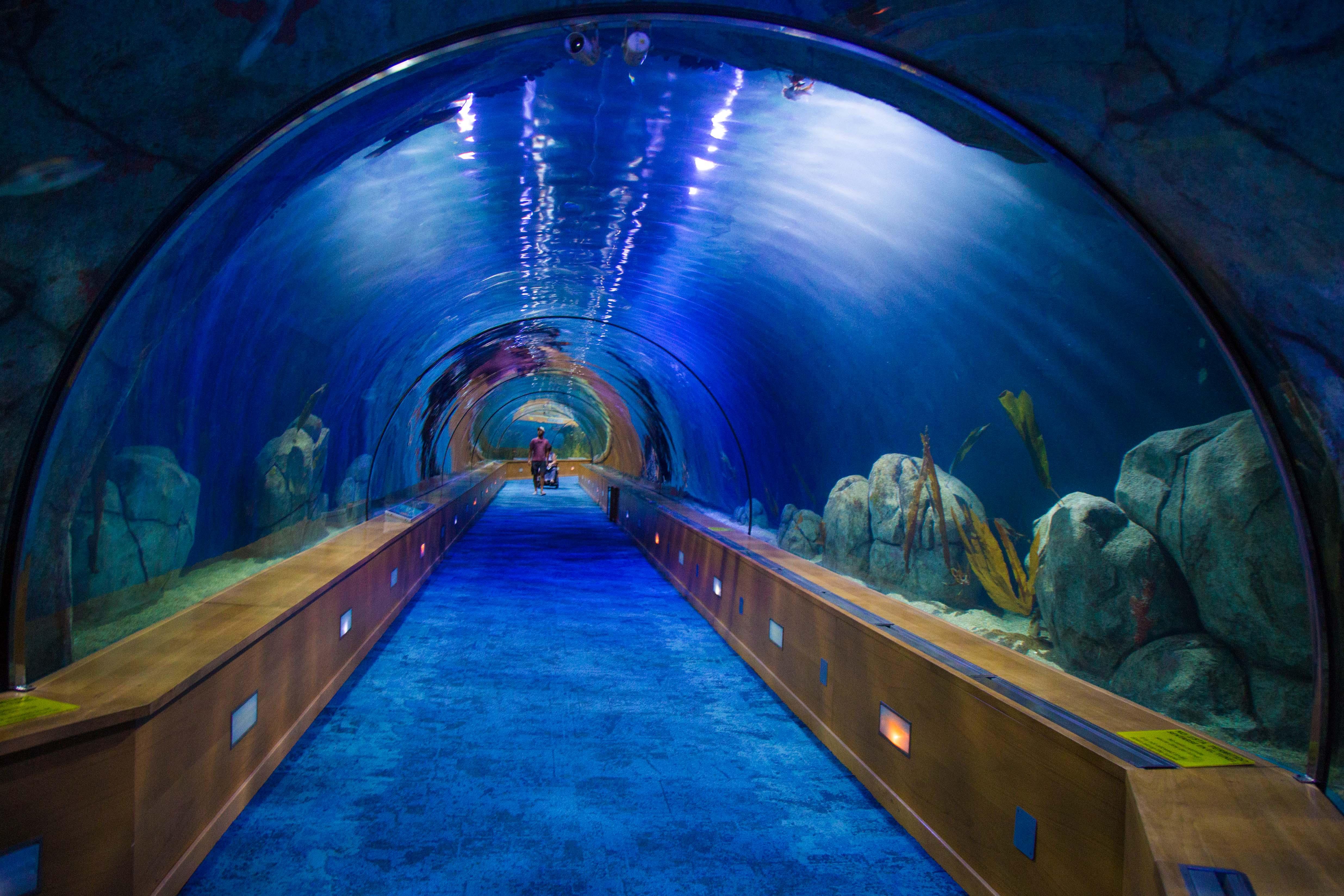 valência aquário