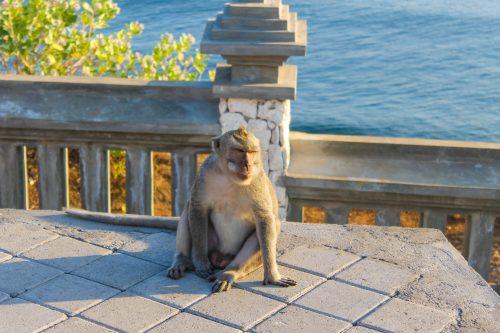 macaco no Uluwatu Temple em Bali