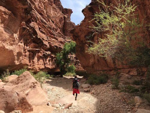 trilha para a havasu falls