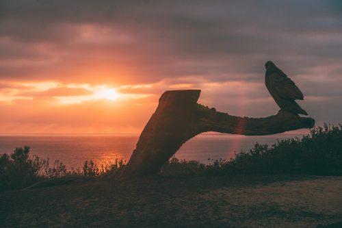 o que fazer em la Jolla: Sunset seats