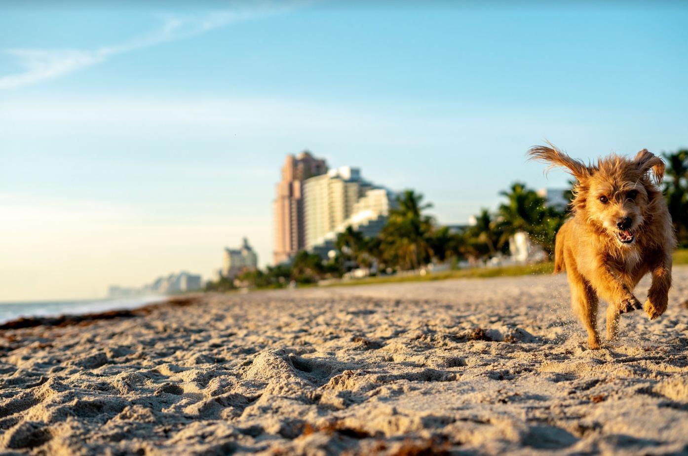 praia dog friendly em Miami